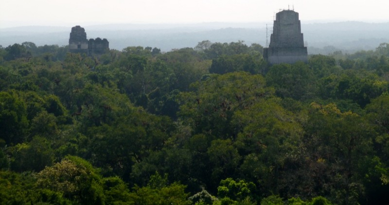 Temples in the midst above the forest canopy