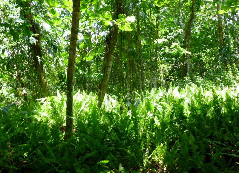 Ferns & Forest