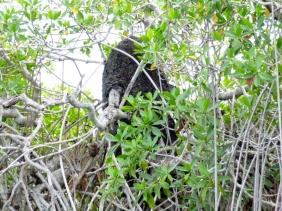 Sian Kaan - Termite Nest