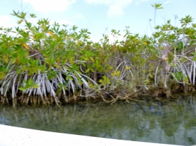 Sian Kaan - Mangroves along canal