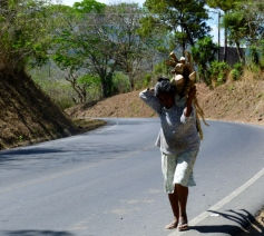 Wood gatherer north of Matagalpa