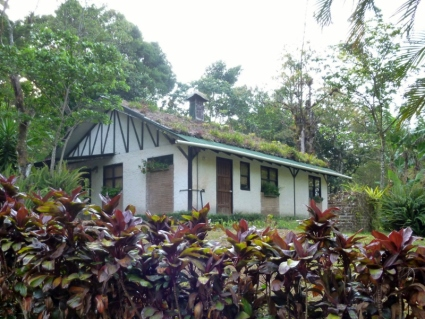 Plant growing roof - Selva Negra