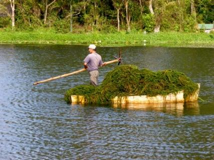 Algae removal - Selva Negra