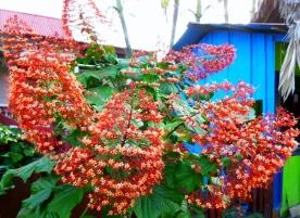 flowers -Cahuita