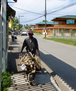 man hauling wood through Cahuita,Costa Rica