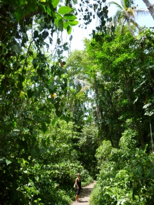 Cahuita National Park - way below the forest canopy