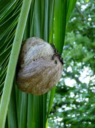 """Sticky Bees"" hive - Tamarindo"