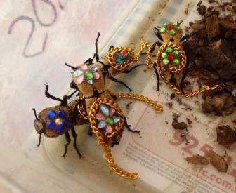 Live beetle jewelry! Merida, Mexico