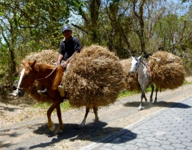 Beasts of burden - Ometepe