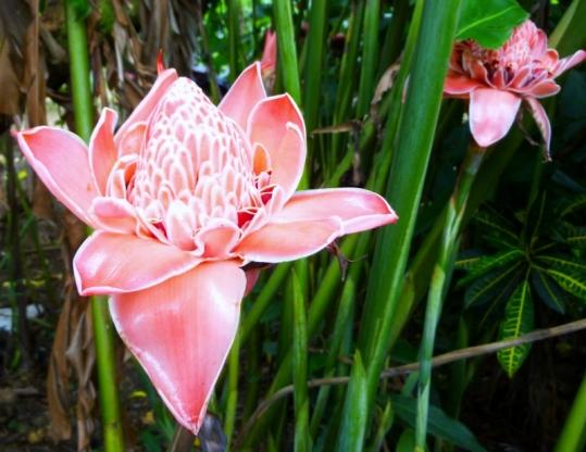 Flower - road to Cahuita