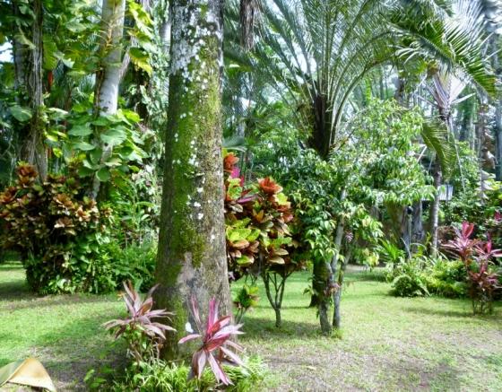 El Jardin Glorioso - Cahuita