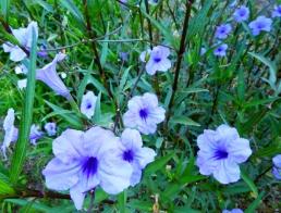 Flowers - Tamarindo