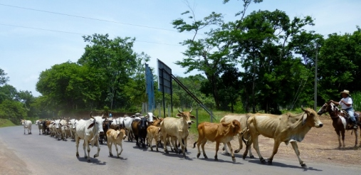 Moving to greener pastures - Rio Dulce