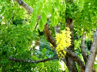 Flowers as wind chimes - Utila