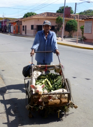 Pigs in a poke, kinda .. - Granada, Nicaragua