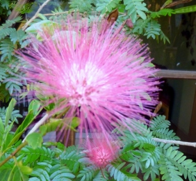 flower - Antigua