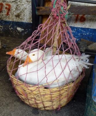 Geese for sale in el mercado in San Pedro La Laguna