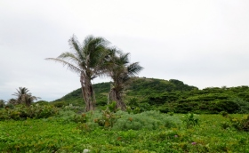 Pumpkin Hill - The highest point on Utila