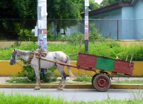 A work vehicle - Leon