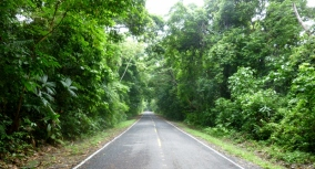 Lushly treed road to San Lorenzo