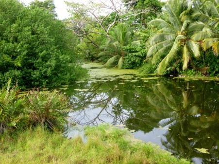 pond at the Smithsonian research center - Bocas del Toro