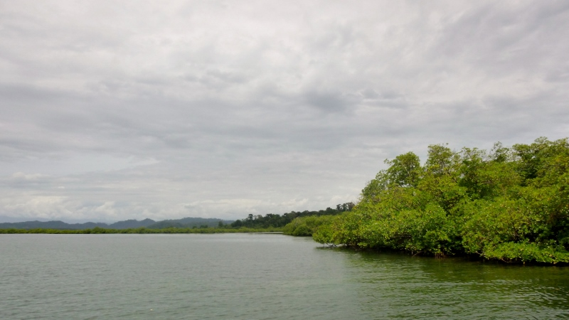 Mangroves and islets