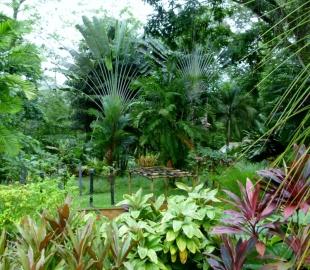 Botanical garden in Bocas del Toro