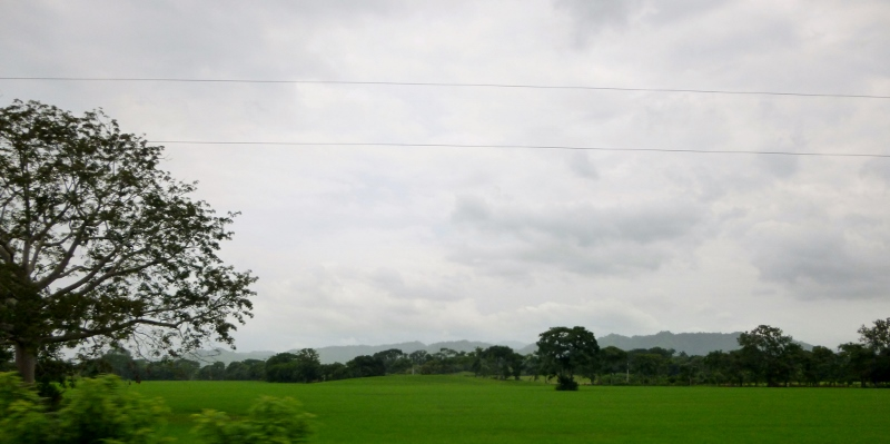 cow country Azuero Peninsula