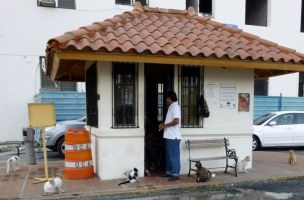 Street cats in Casco Viejo, Panama City
