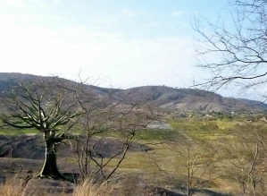 Ceibo trees north of Manta
