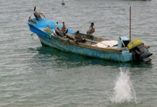Peruvian Pelicans - Puerto Lopez