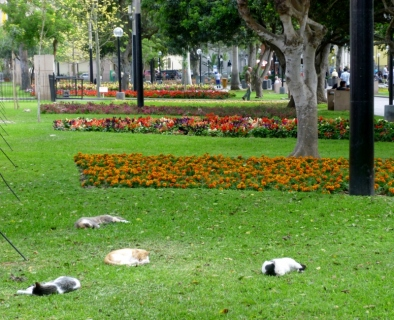 sleeping cats in Kennedy Park - Lima