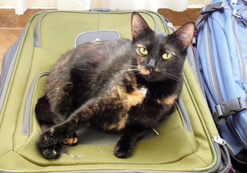 Grietje claimed one of our suitcases as her new bed
