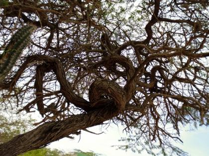 tree with a twist