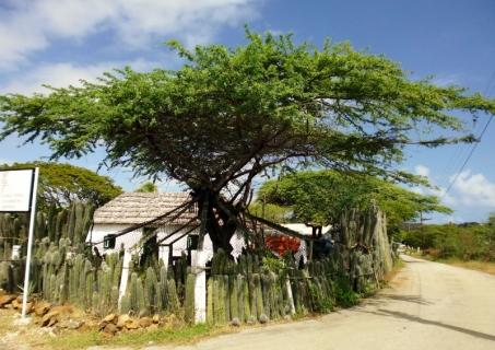 on the corner at Kunuku Museum
