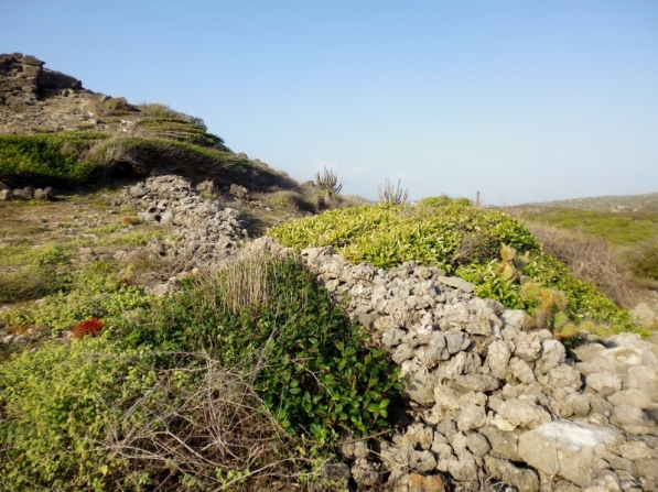 plantation boundary line of coral and limestone