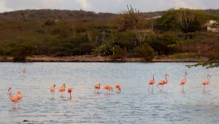 flamingos in salt pans