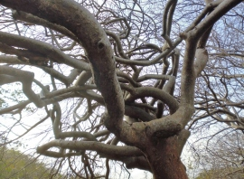 twisting tree trunk