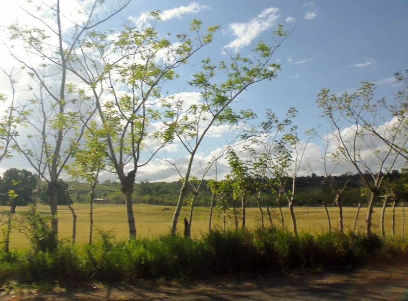 living fence -wire strung between small, growing trees