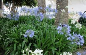 flowers, Lagos, Portugal,