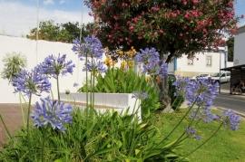 flowers, Albufeira, Portugal