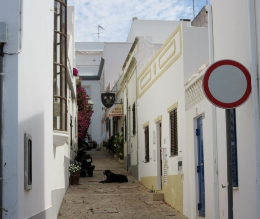 dog on cobbled street, Albufeira, Portugal