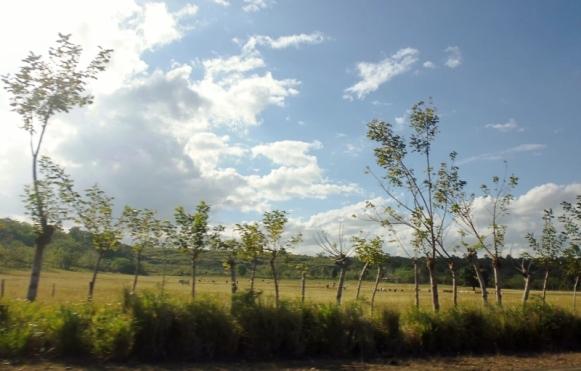 Living fence - Boca de Yuma - the drive Dominican Republican-
