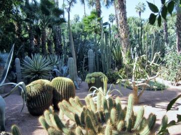 Jardin Majorelle, Marrakesh, Morocco