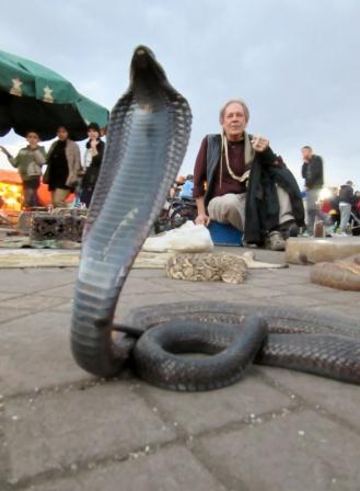 Snake charmers and a cobra in the Fez Medina, Marakesh
