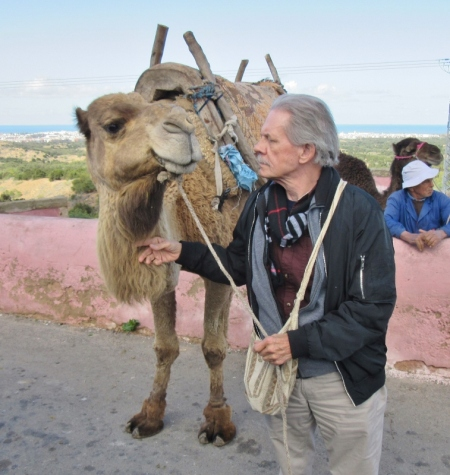 A camel and human interaction - On the road to Essaouira, Morocco