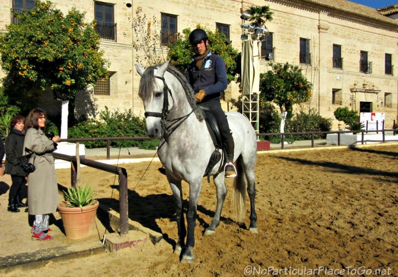 Andalusian Horse, Cordoba, Spain