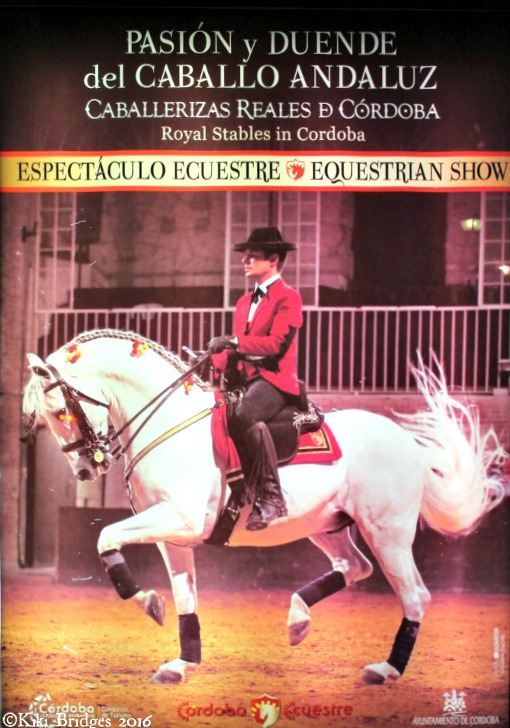 The Passion and Spirit of the Andalusian Horse