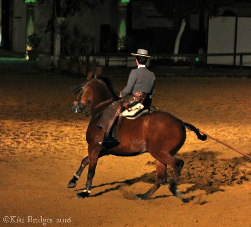 The Passion and Spirit of the Andalusian Horse, Cordoba, Spain